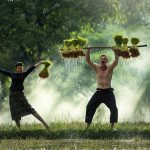 Dieta roślinna – co jeść, żebybyć pięknym izdrowym